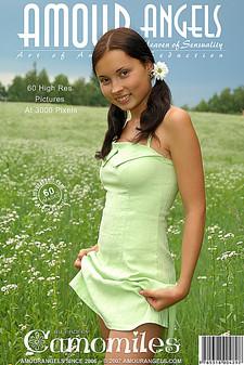 Amour Angels - Nastya (Cheryl) - Camomiles